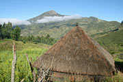 Timor highlands